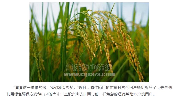 痛心!秀山近万斤生态秧青大米滞销,我们怎么帮?