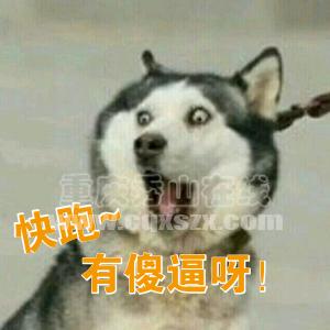 默认标题_搞笑表情_2018.09.14(2).png