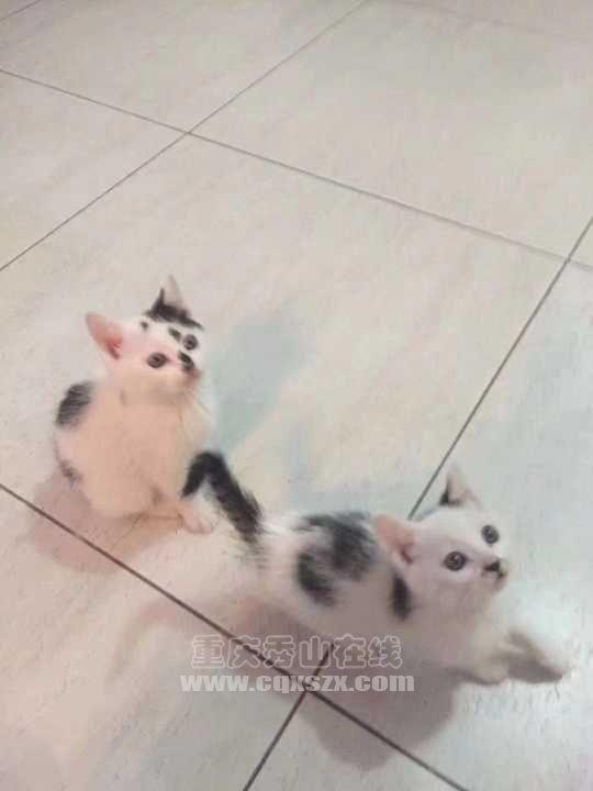想领养两只小奶猫。